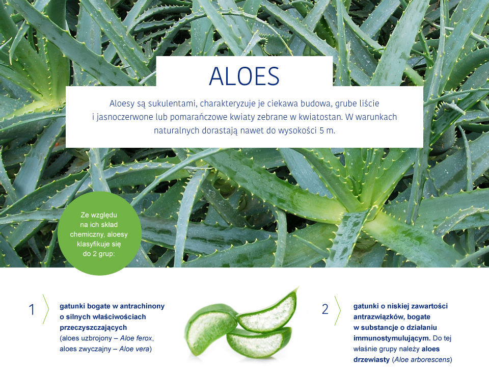 aloes_aloes