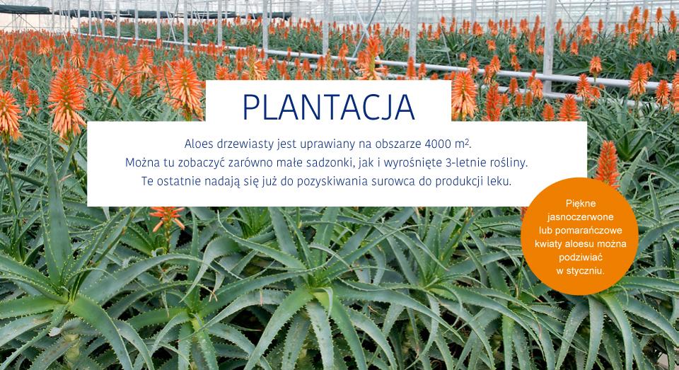 plantacja1