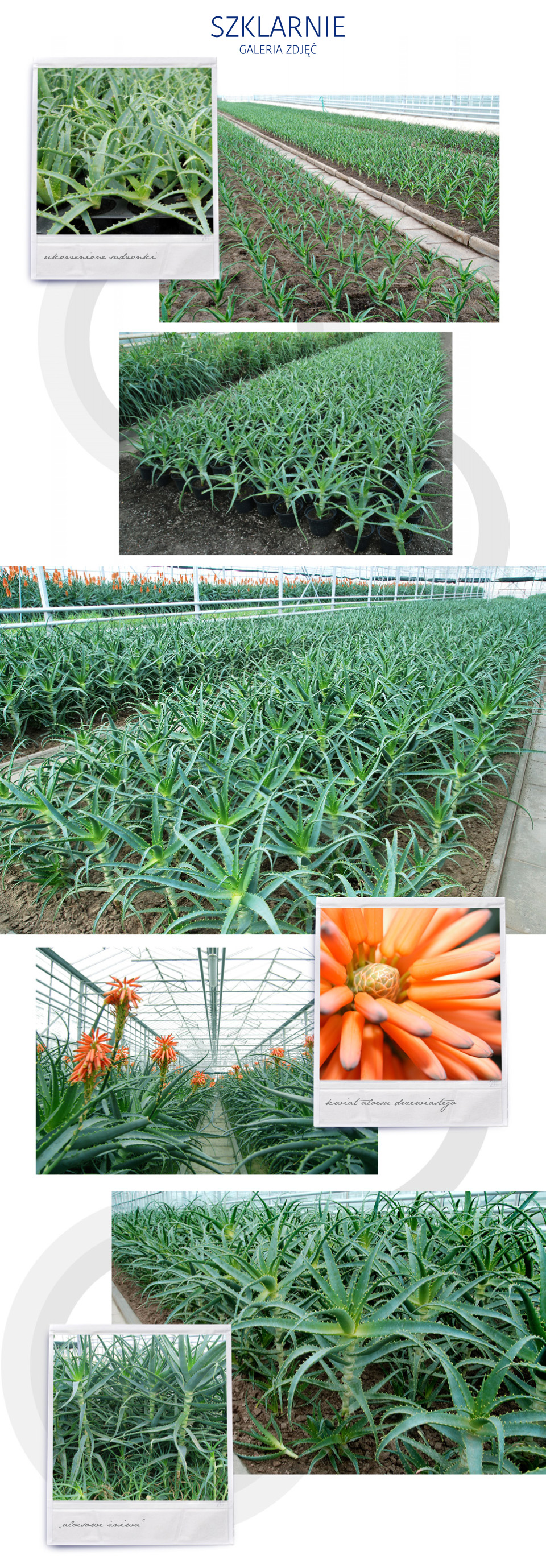 plantacja3-4-5